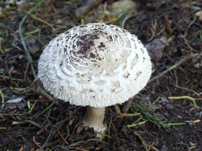 Tipos de hongos que crecen en el jard n ehow en espa ol for Hongos en el cesped jardin
