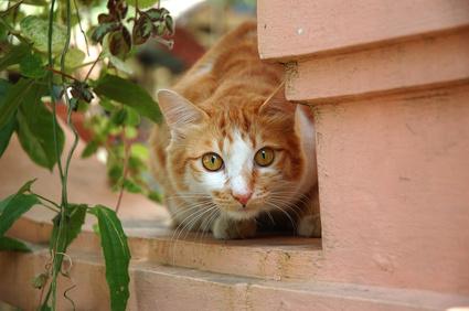litter training cats