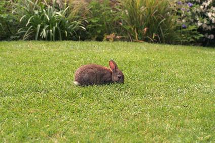 Ecosystem of a Rabbit