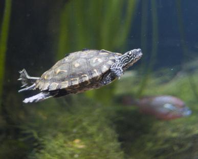 Differences Between Land Turtles & Marine Turtles