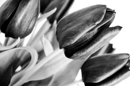 How To Cut Fresh Flower Stems Garden Guides