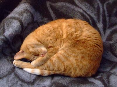 Cat Flu Home Remedies