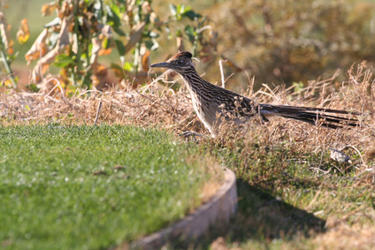 How to Feed a Roadrunner