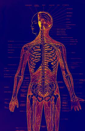 human circulatory system images. Human Circulatory System