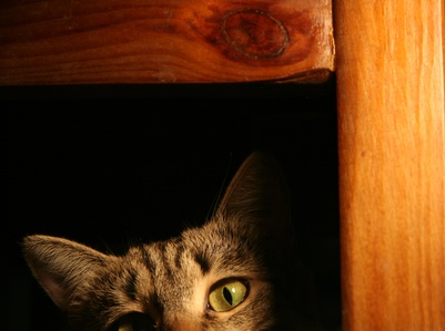 how to get rid of static cling on cats. Black Bedroom Furniture Sets. Home Design Ideas