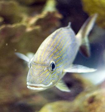 How do I Make Aquarium Fish Grow Faster?
