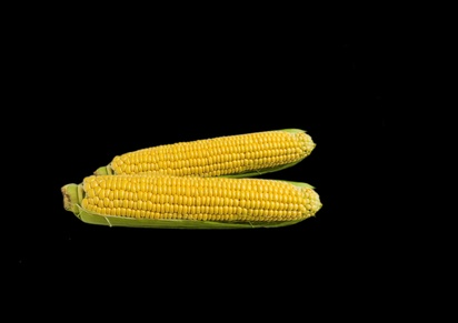 How to Tell When Corn on the Cob Is Bad | LEAFtv