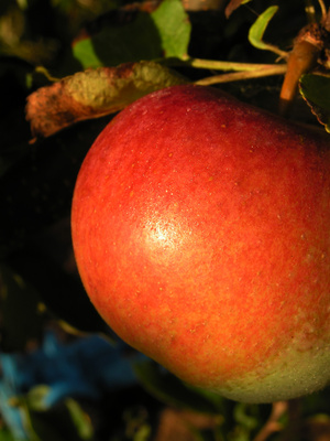 Total Carbohydrates of a Small Apple | Healthy Eating | SF Gate