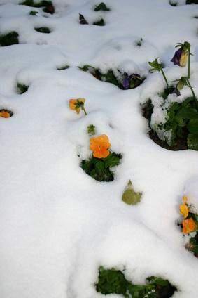 Perennial Flowers That Bloom Year Round Garden Guides