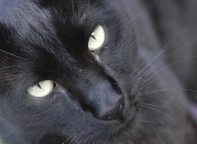 how to tell if my cat has a uti
