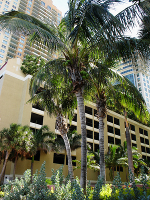 How Much Does a CNA Get Paid in Florida?