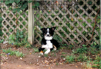 How To Teach A Dog Not To Jump The Fence Pets