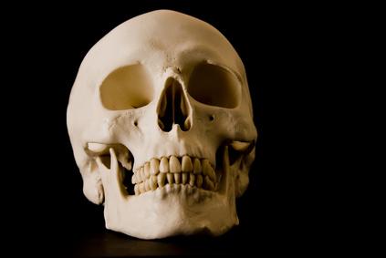 The Difference Between Dog Bones & Human Bones