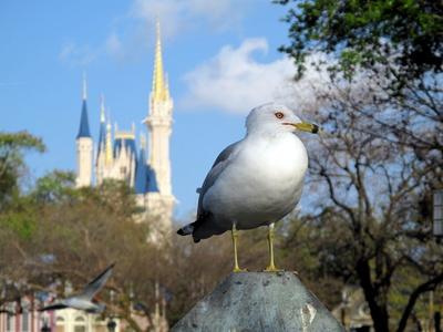 disney world orlando florida rides. Walt Disney World is the most