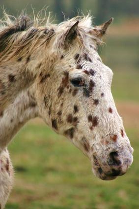 Night Blindness In Horses Ehow Uk