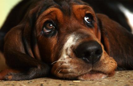 Vinegar & Alcohol Treatments for a Dog's Ears