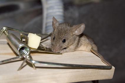 C mo construir una trampa electr nica para ratones ehow en espa ol - Trampas para cazar ratas ...
