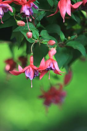 Shade Loving Trailing Plants Ehow Uk