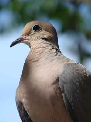 How To Raise Baby Grey Amp White Ring Dove Birds Ehow Uk