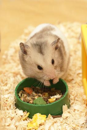 Can I Feed Baby Mice Cat Formula