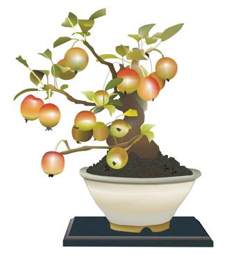 Rboles frutales que hacen buenos bons is ehow en espa ol - Como se cuida un bonsai ...