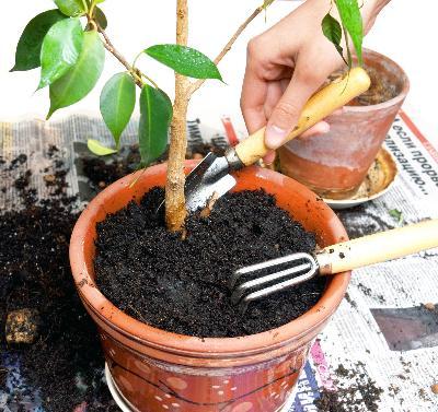 cómo hacer tierra para macetas | ehow en español