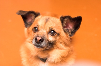 Can I Use Dog Anti Fungal Cream