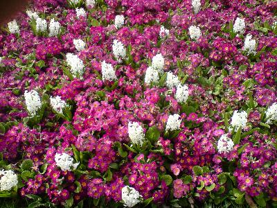 What Outdoor Plants Are Easy To Take Care Of Ehow Uk