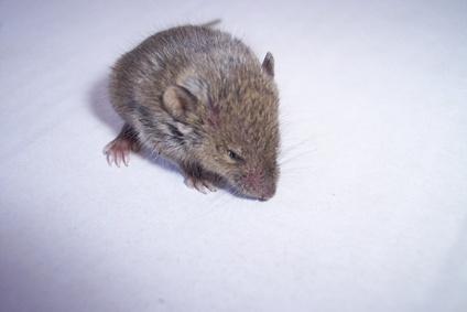 C mo hacer una trampa para ratones casera ehow en espa ol - Como atrapar ratones ...