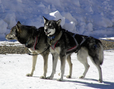 Dogs & Ibuprofen