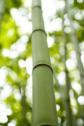 Bamboo Plants Garden Guides