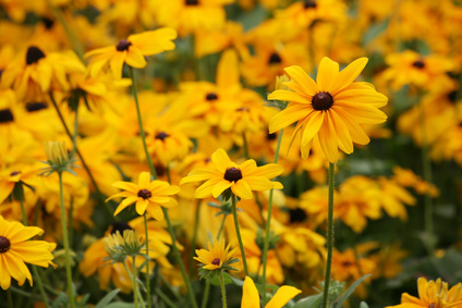 The longest blooming perennials | eHow UK