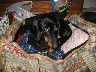How To Travel With A Dog To Ireland Usa Today