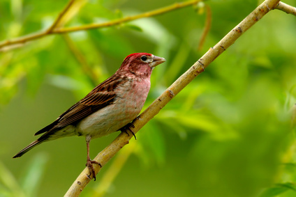Safe Fruits & Vegetables for Finches
