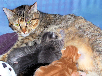 What Are the Treatments for a Nursing Cat's Sore Nipples?