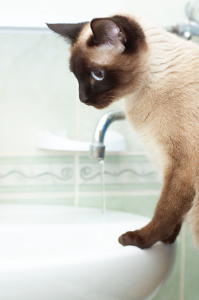 How to Wash a Cat With Dawn Dishwashing Detergent