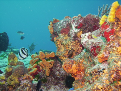 Caribbean Cruises That Include Cozumel Usa Today