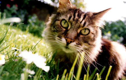 how to keep cats out of yard naturally