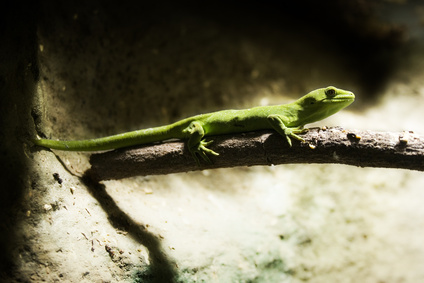 Toxic Chemicals for Geckos