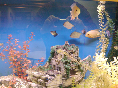 feng shui tips location of a fish tank at home pets. Black Bedroom Furniture Sets. Home Design Ideas
