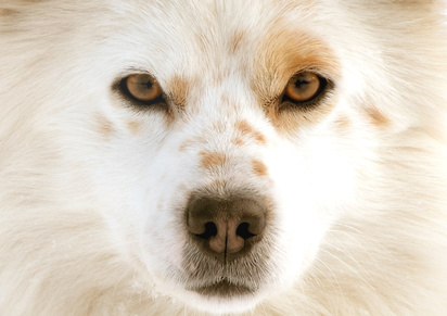 Homemade Eye Wash for Dogs