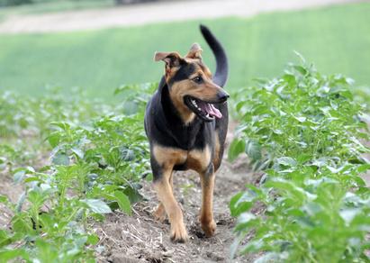 Lymphoma In Dogs Symptoms Uk