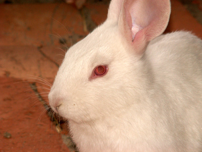 How to control odors from a male pet rabbit animals for Male urine smells like fish