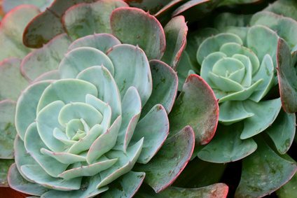 How To Take Care Of Succulent House Plants Ehow Uk