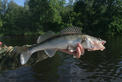 Michigan Fishing Vacations Usa Today