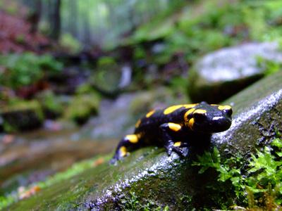 How to Hatch Salamander Eggs
