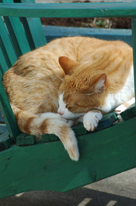 homemade cat repellent for outdoor furniture ehow uk. Black Bedroom Furniture Sets. Home Design Ideas