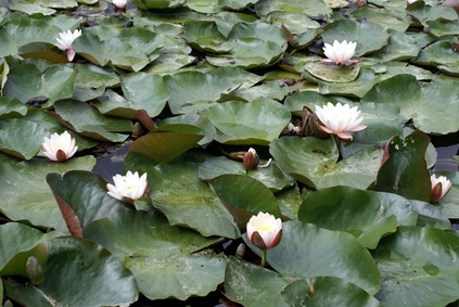 The best way to plant pond plants ehow uk for Best aquatic plants