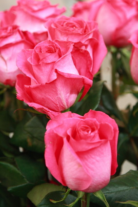 How To Make Rose Bushes Bushy
