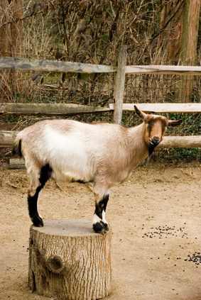 Natural Remedies For Worms In Goats